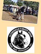gatton clydesdale & heavy horse field days